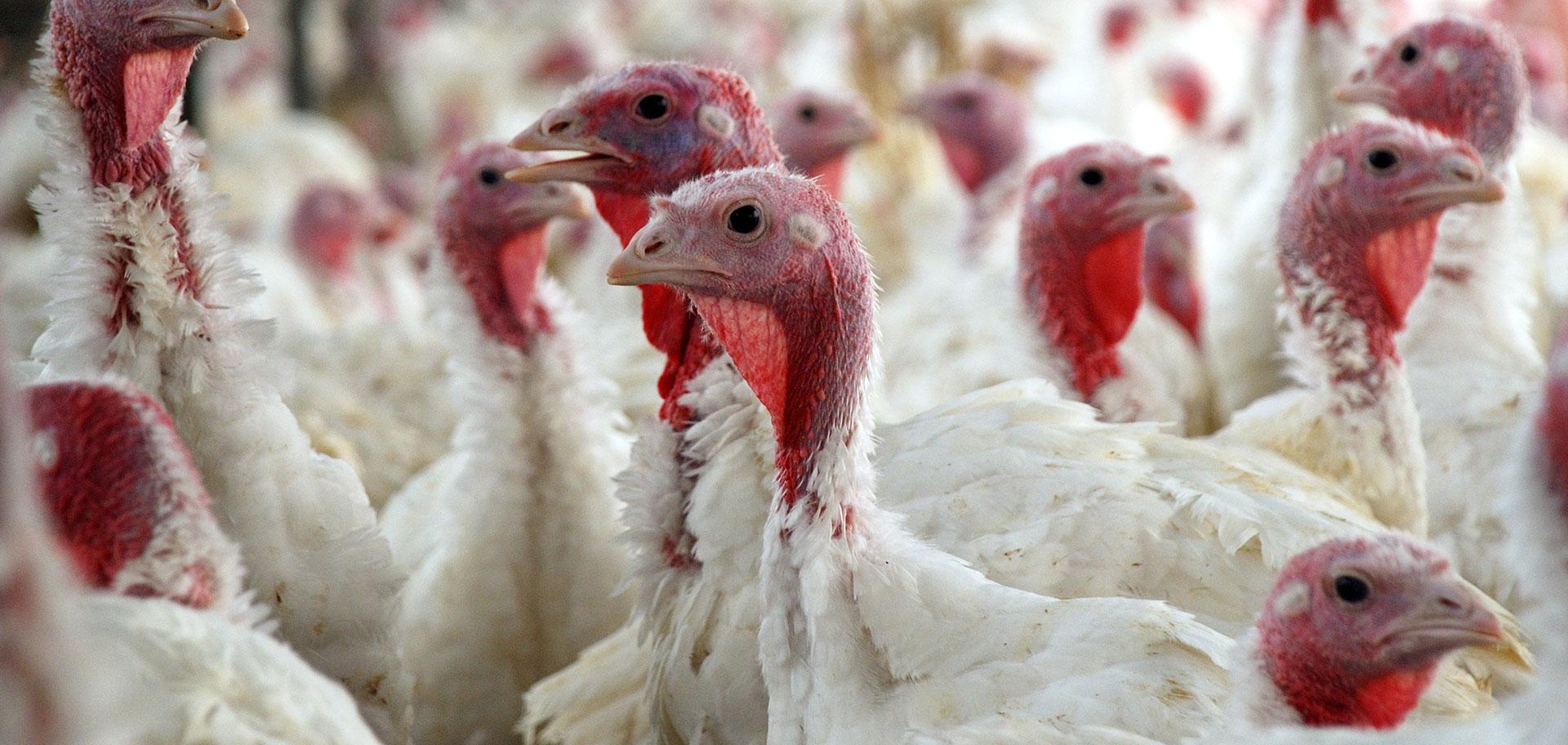 turkey-slider-2